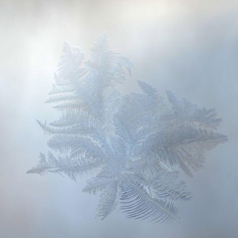 FrostBloom1