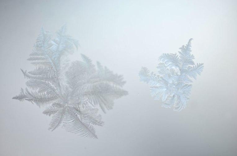FrostBloom3