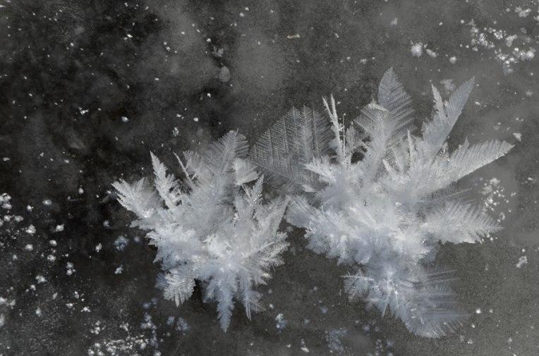 FrostFeathers