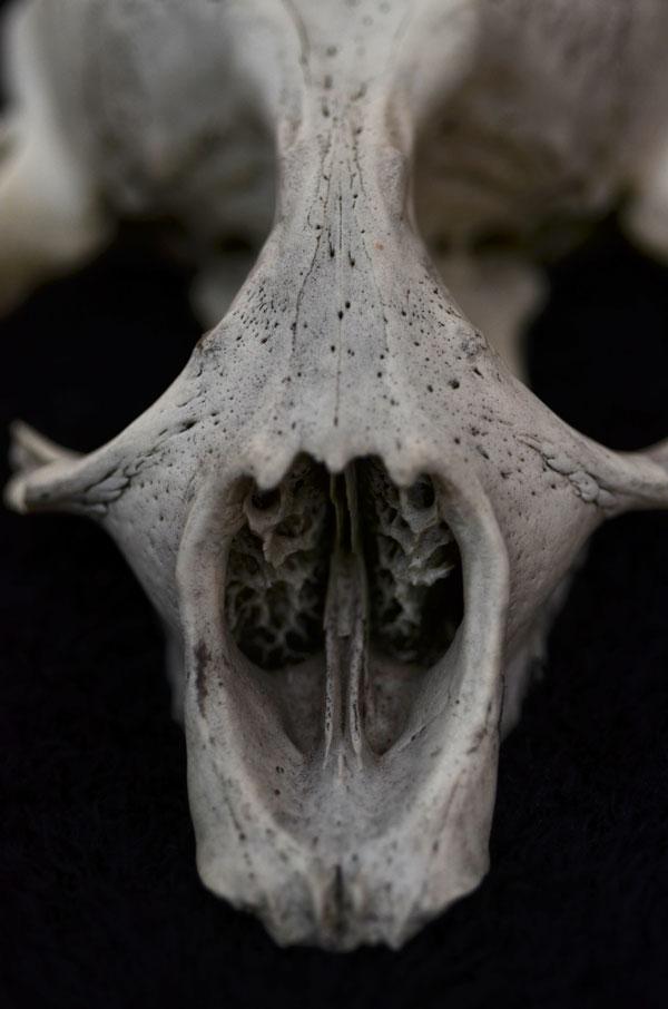 SealSkull3