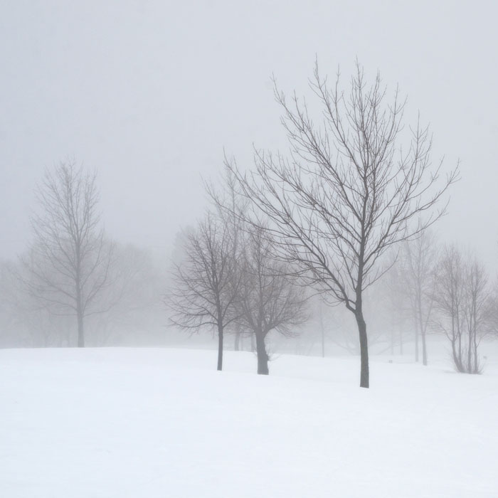 WinterFog3