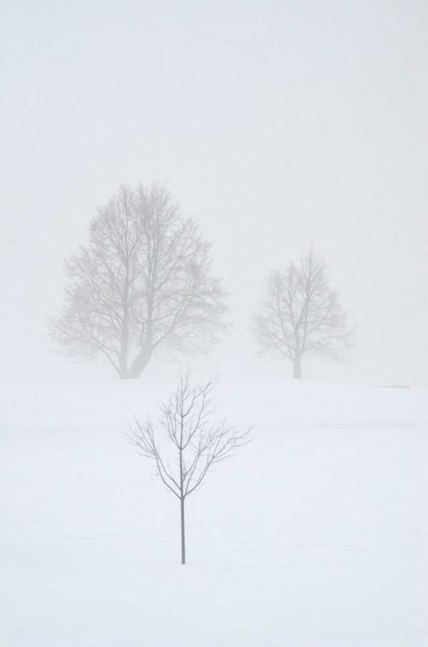 WinterFog7