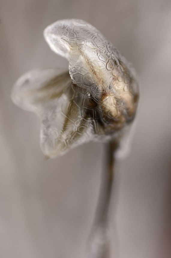 MosaicSeedhead_MeltingFormations