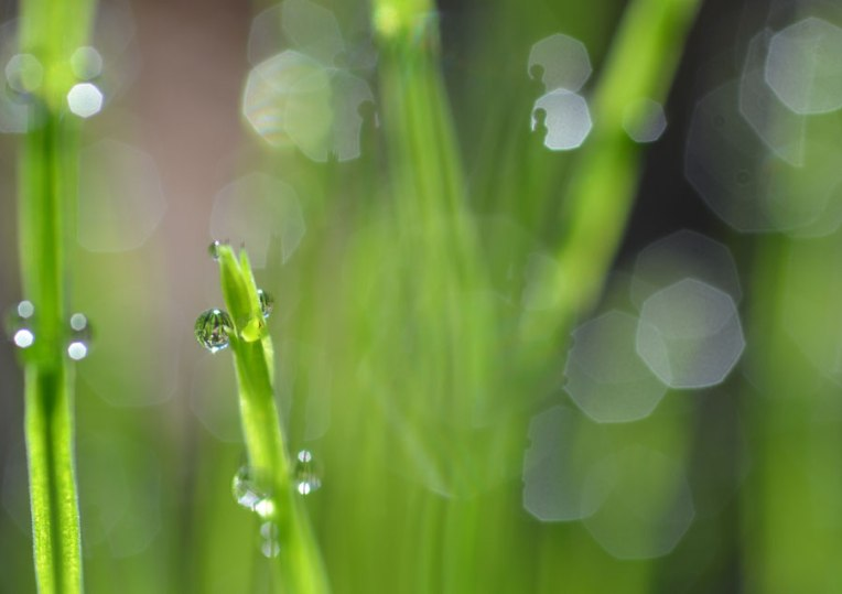 Small-Drops-of-Grass