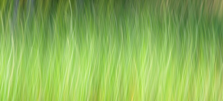 Swaying-Grasses-2