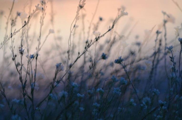 WildflowersatDusk6