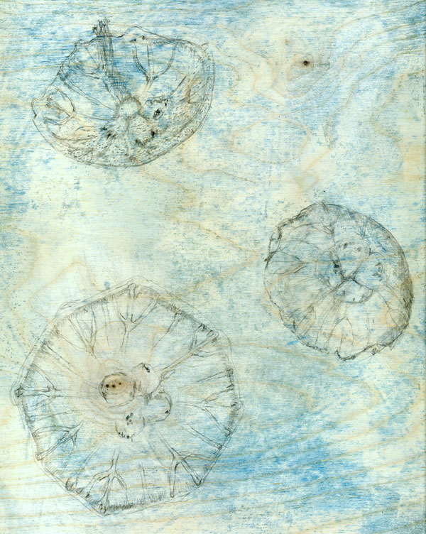 Moon-Jellies_Underdrawing