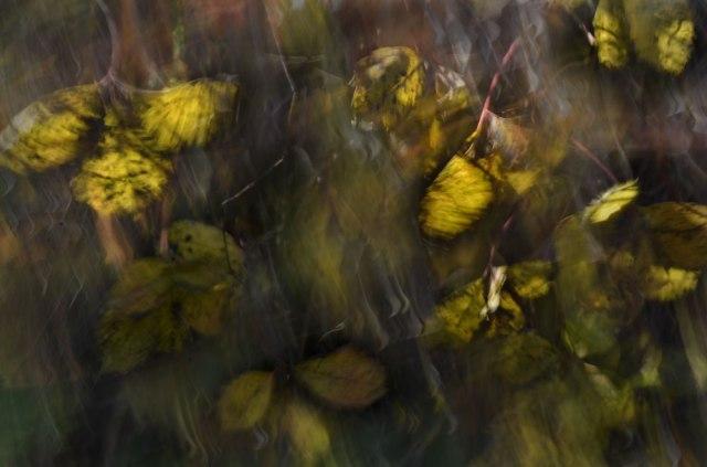 Autumn-Butterflies