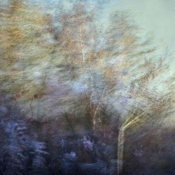 Etched-Autumn8