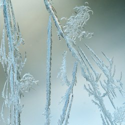WindowFrost_Crystals1