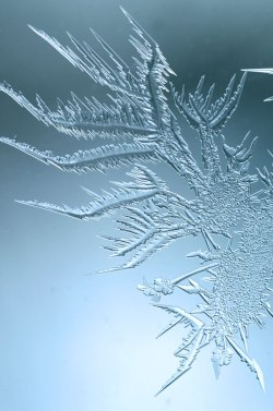 WindowFrost_Crystals12