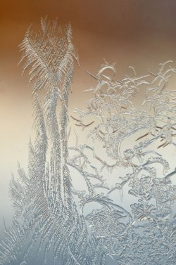 WindowFrost_Crystals2
