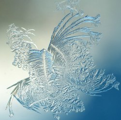 WindowFrost_Crystals3