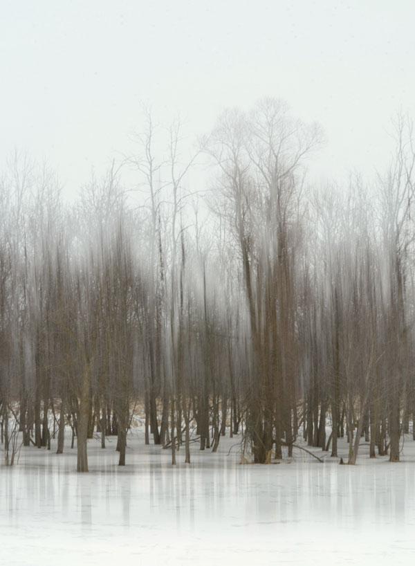 SwampTrees1
