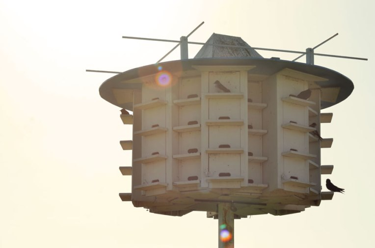 Purple-Martin-Nesting-Box