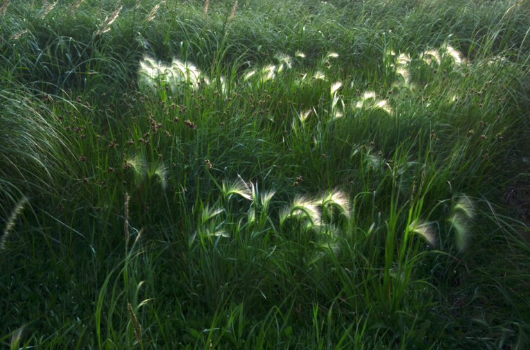 Grasses_River'sEdge2