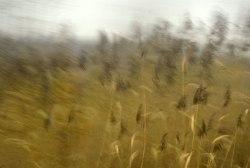 Autumn-Gold