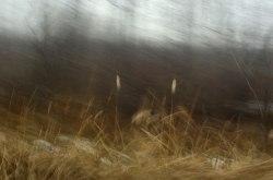Autumn-Gold3