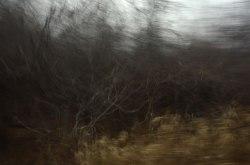 Tangled-Bones-of-Autumn