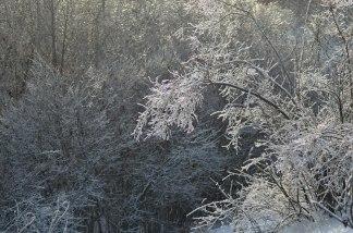IcedLandscape7_trees