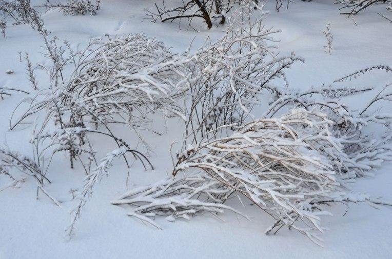 WinterWonderland7