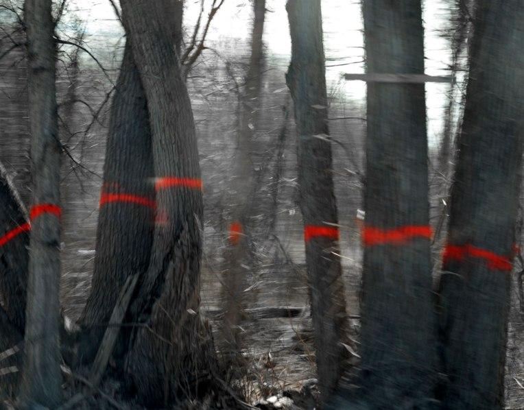 MarkedTrees1