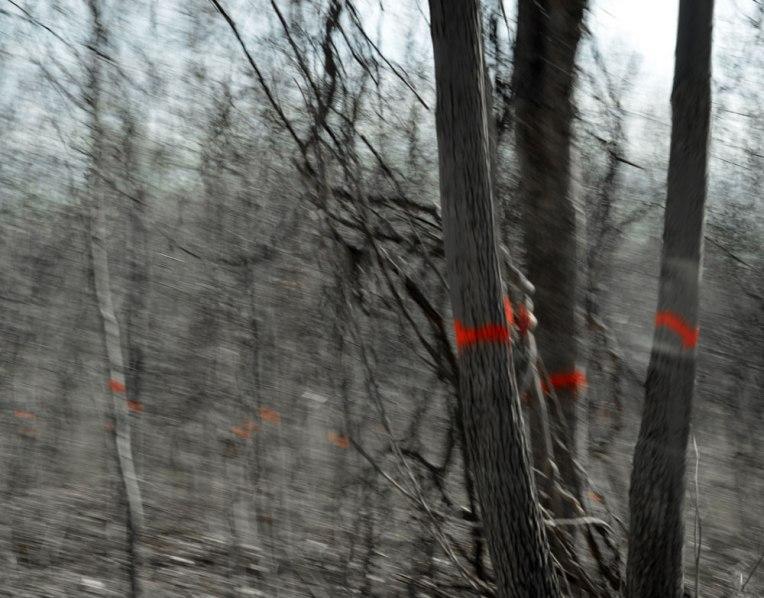 MarkedTrees2