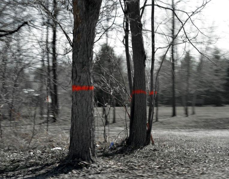 MarkedTrees3