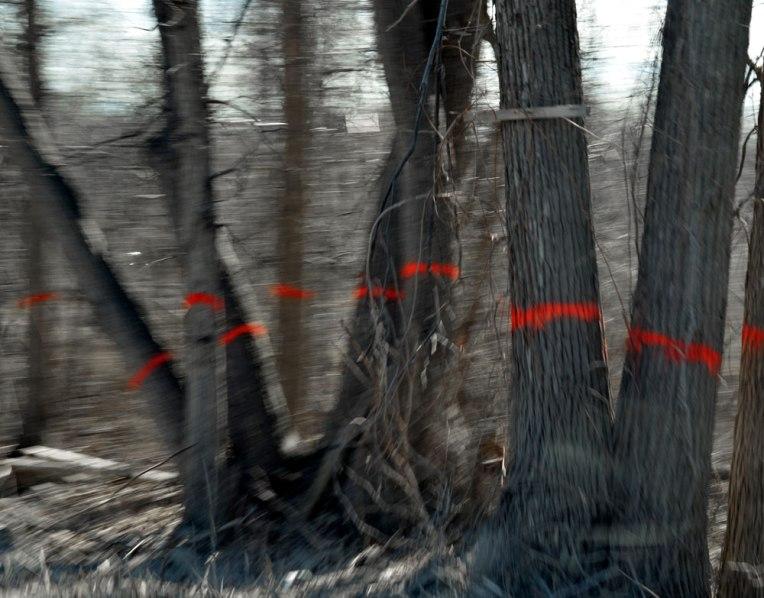 MarkedTrees4