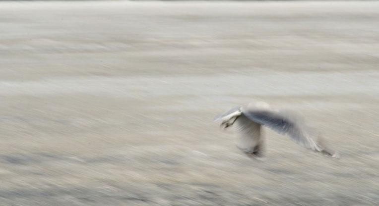 The-Gulls-1