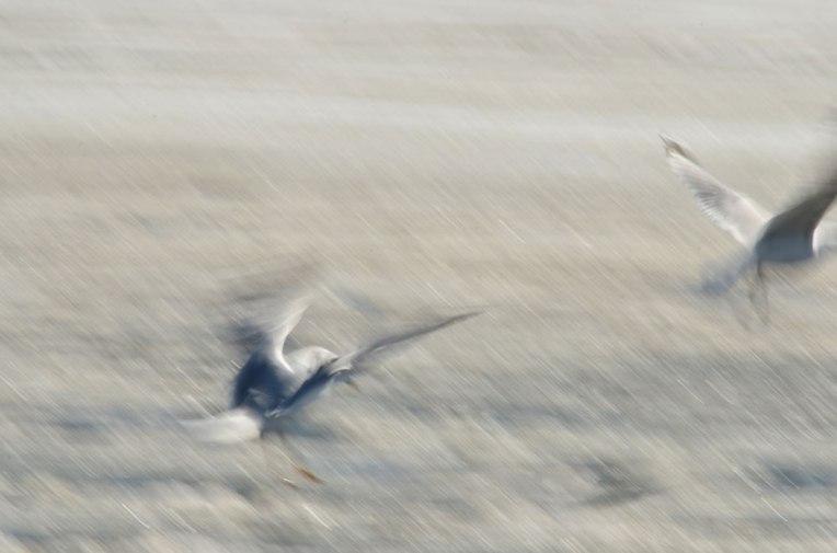 The-Gulls-2