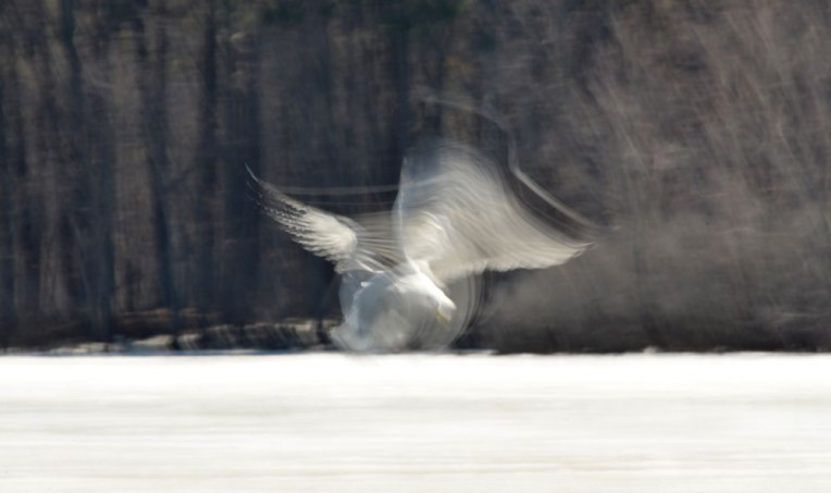 The-Gulls-3