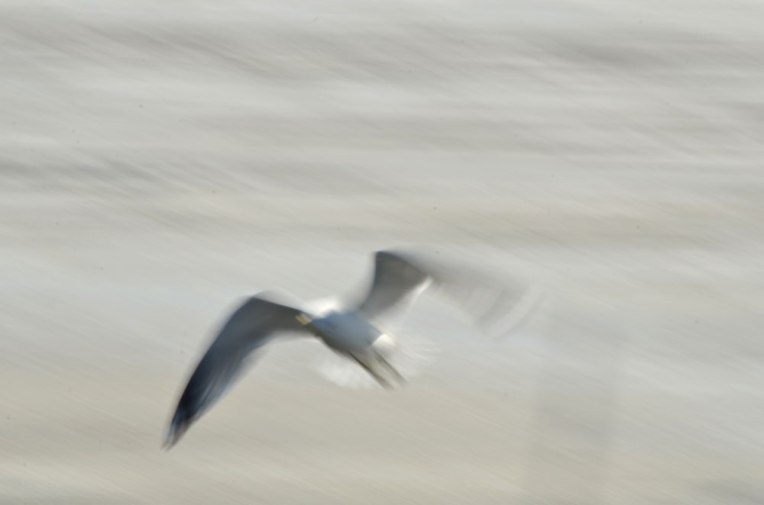 The-Gulls-5