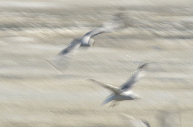 The-Gulls-6