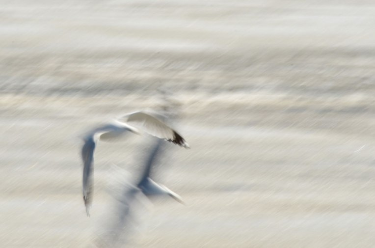 The-Gulls-7