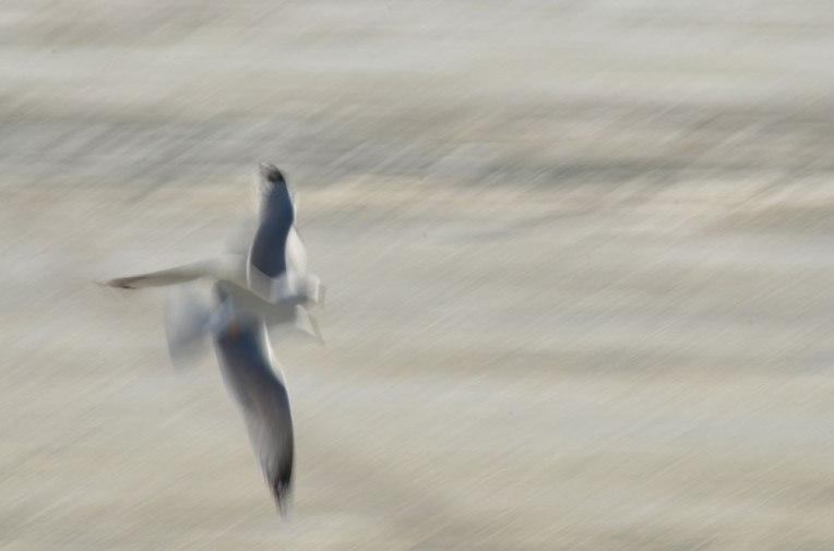 The-Gulls8