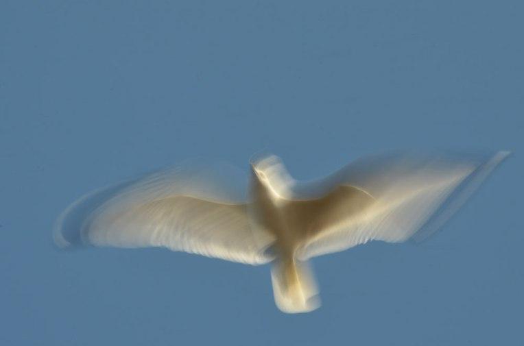 The-Gulls9