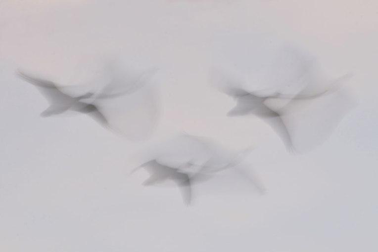 FlightPatterns_Geese1