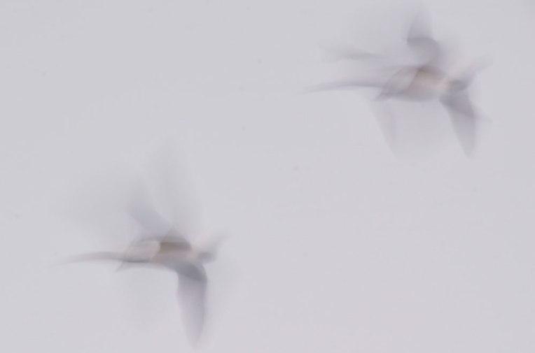 FlightPatterns_Geese2