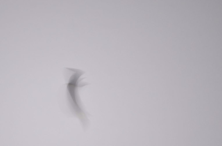FlightPatterns_Gulls3