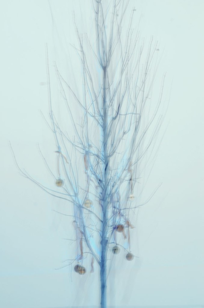 WinterTree_HoldingMemories4