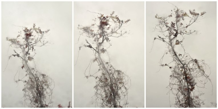 Sumac & Vine Triptych