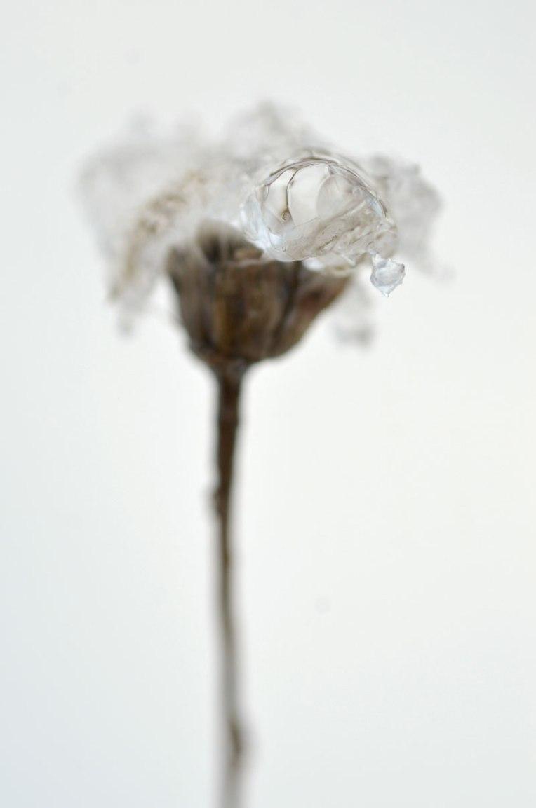 glazedflora1