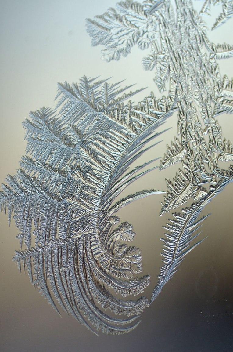 winterfrost2
