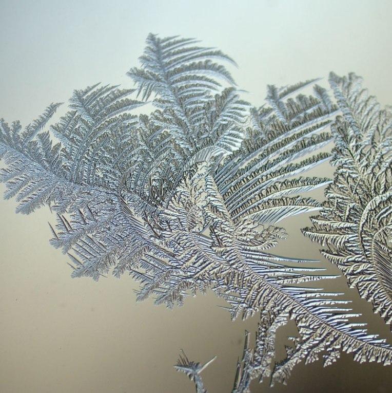winterfrost4