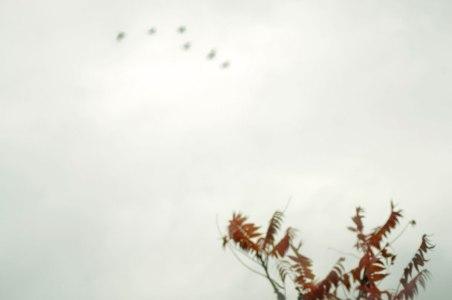 Sumac,Sky-and-flight