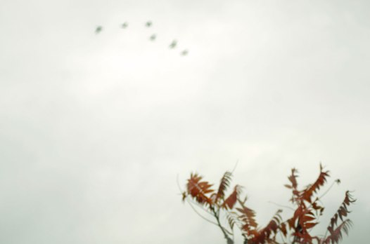 Sumac,Sky-and-flight
